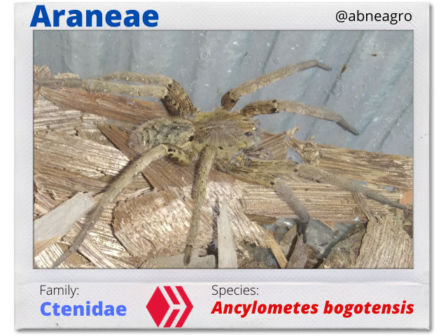 @abneagro(2).png