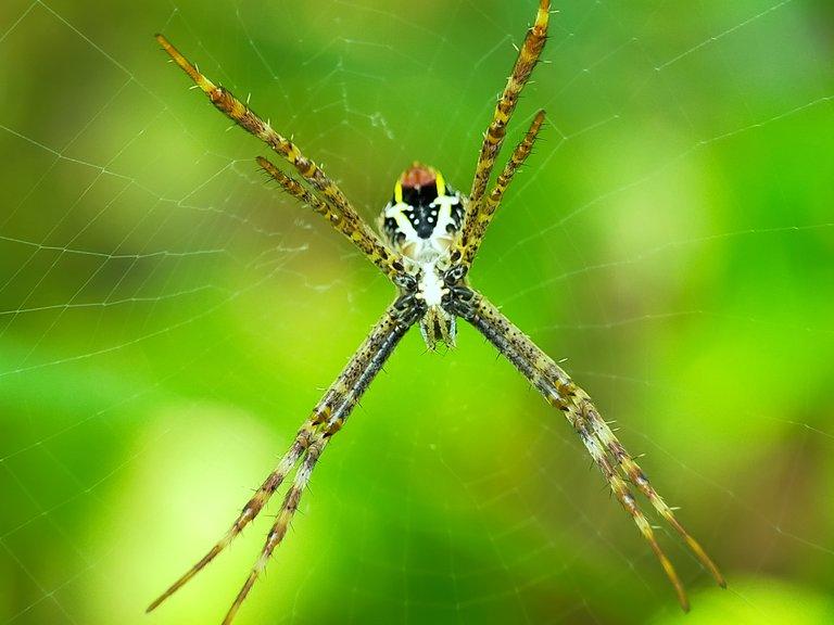 Spider (2).jpg