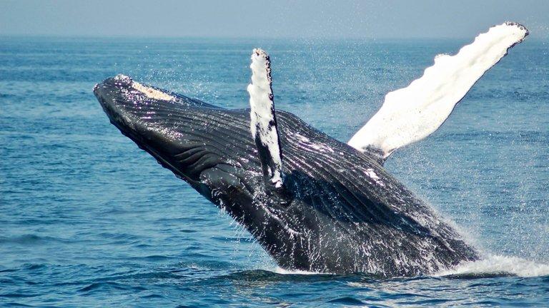 whale leo.jpeg