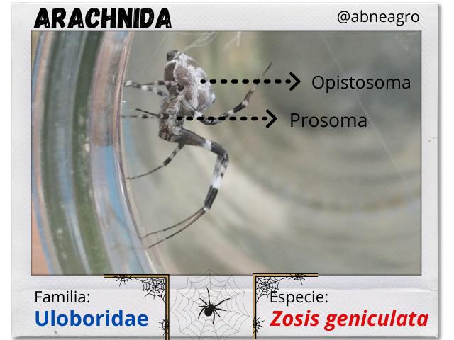 Arachnida(3).png