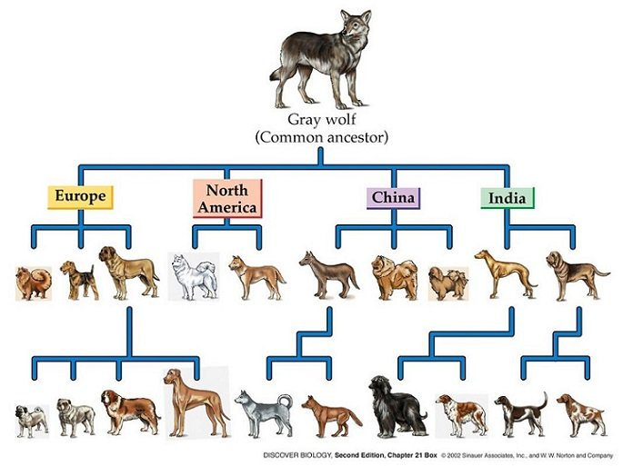 wolf-and-dog.jpg