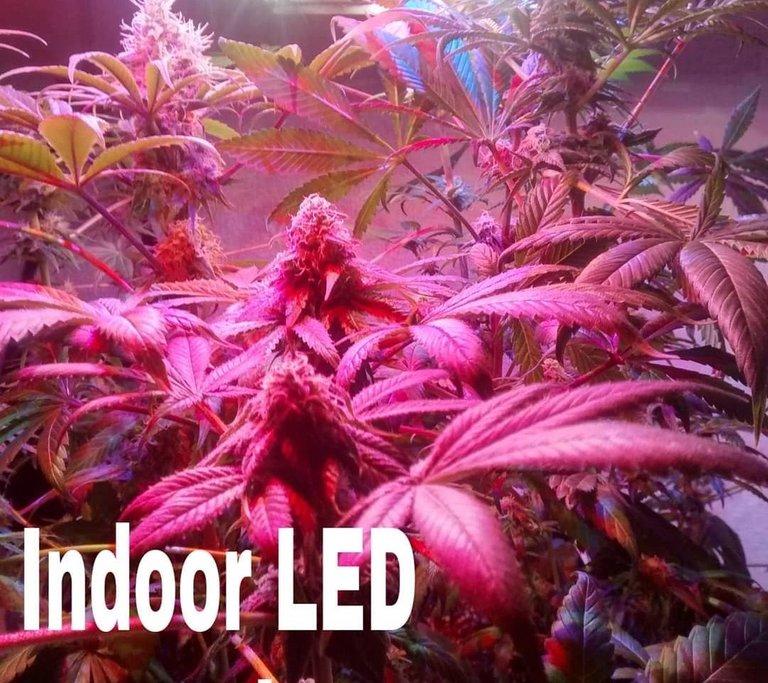 Indoor_LED_1.jpg