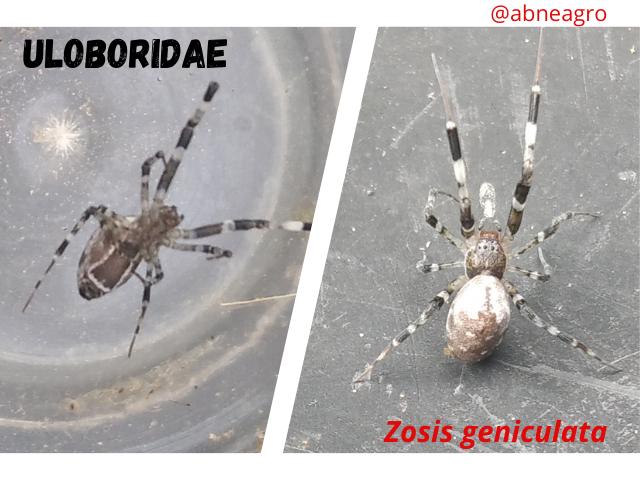 Arachnida(4).png