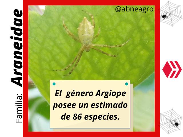 Araneidae(1).png
