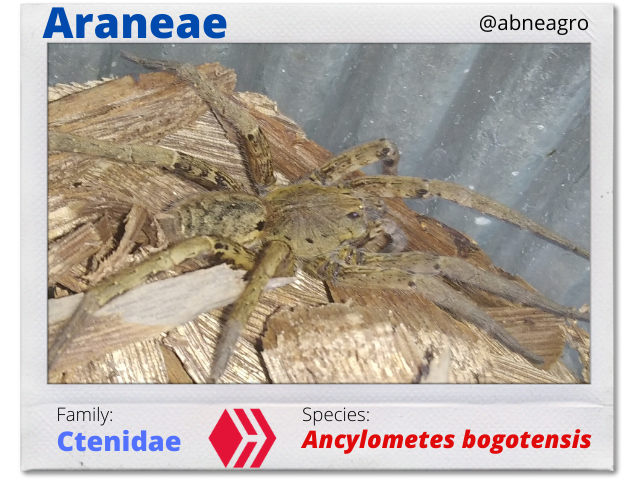 @abneagro(6).png