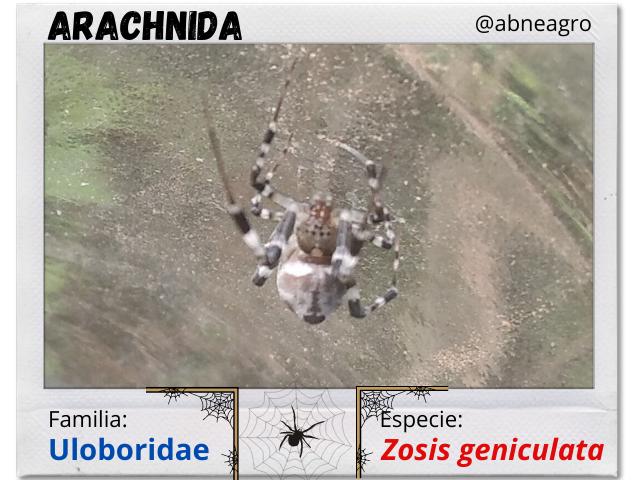 Arachnida(2).png
