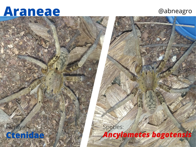 @abneagro(8).png