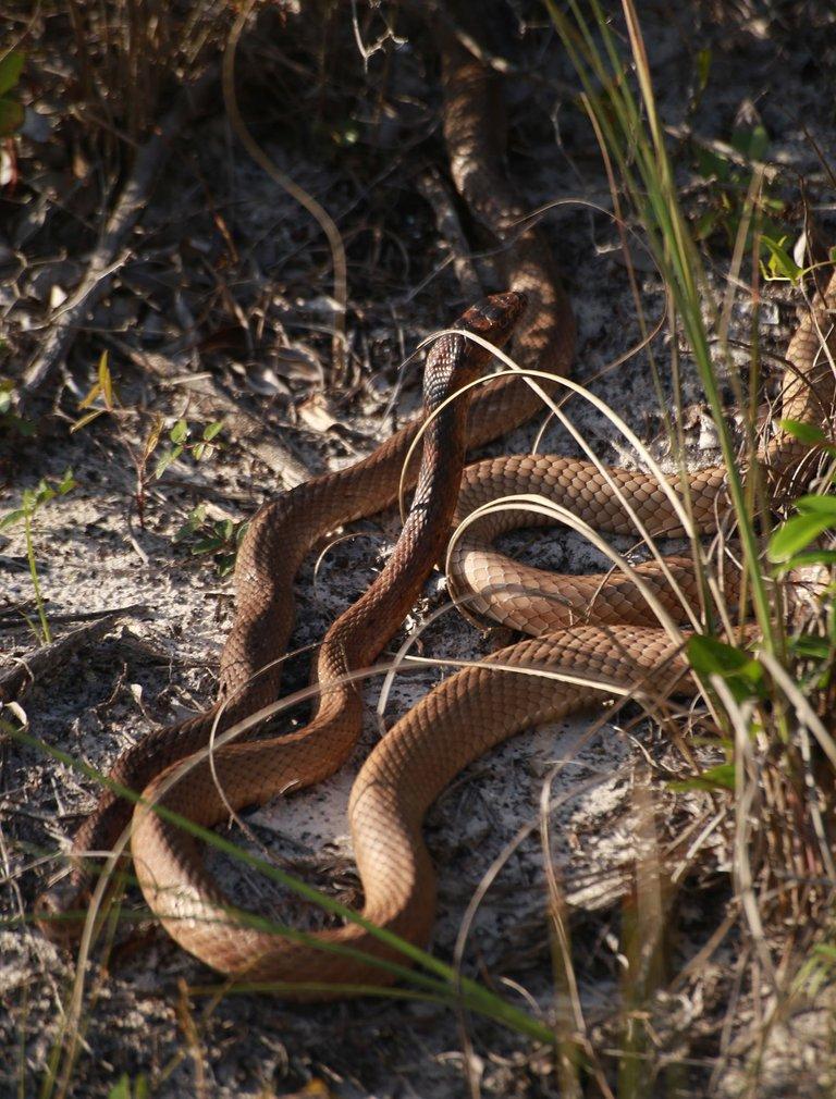 dune_snakes.jpg