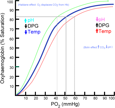 Hemoglobin saturation curve