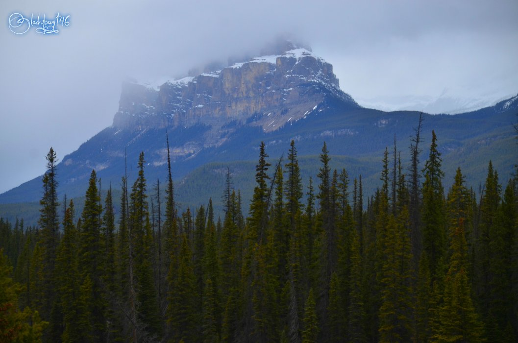 Castle mountain4.jpg