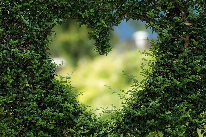 heart-1192662__480.jpg