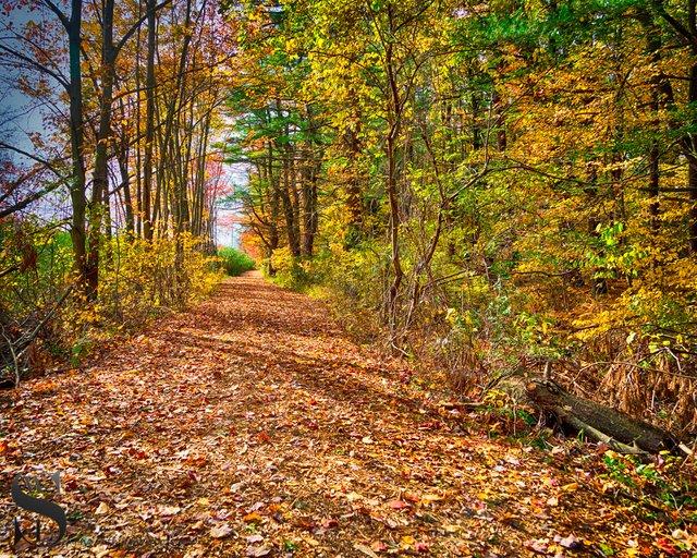 1 1 Trees Beaverbrook trail2.jpg