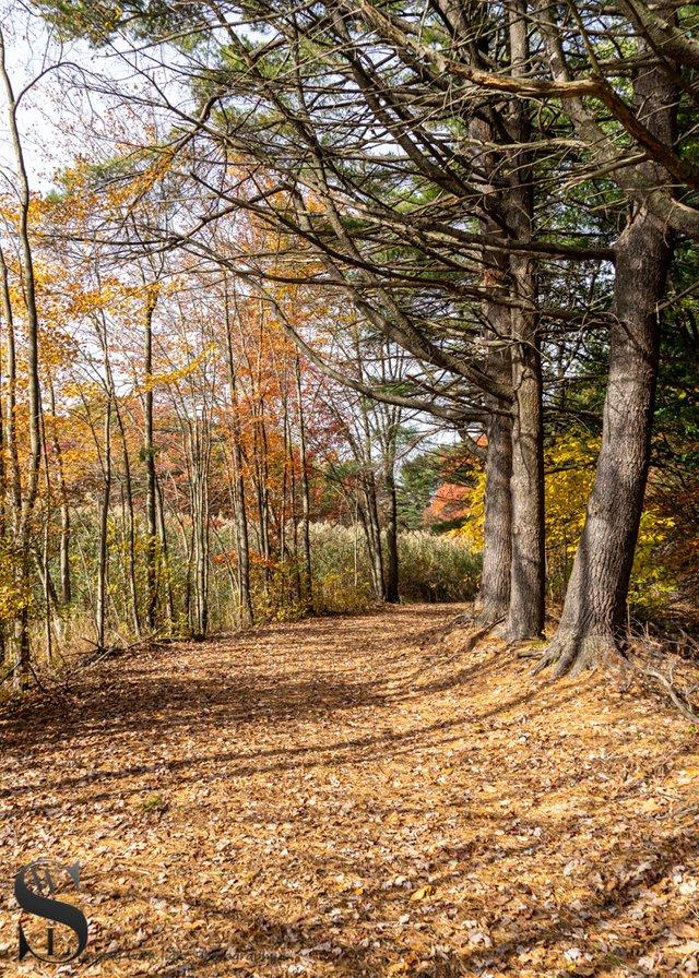 1 1 Trees Beaverbrook trail5.jpg