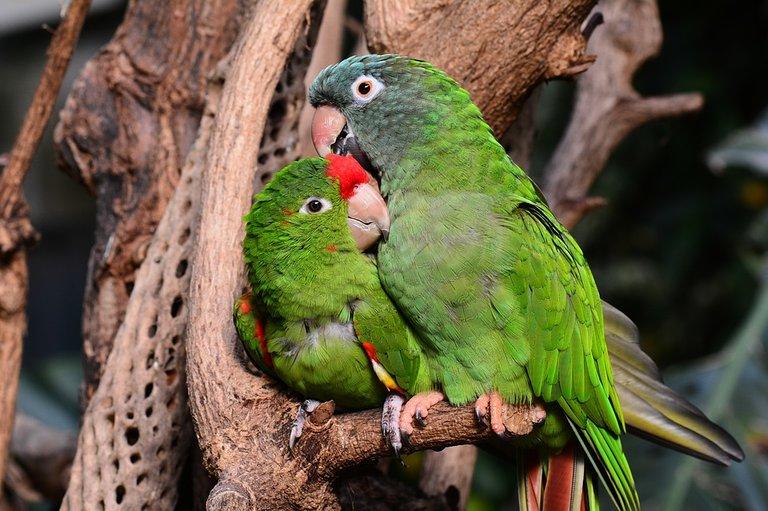 parrot-1271428_960_720.jpg