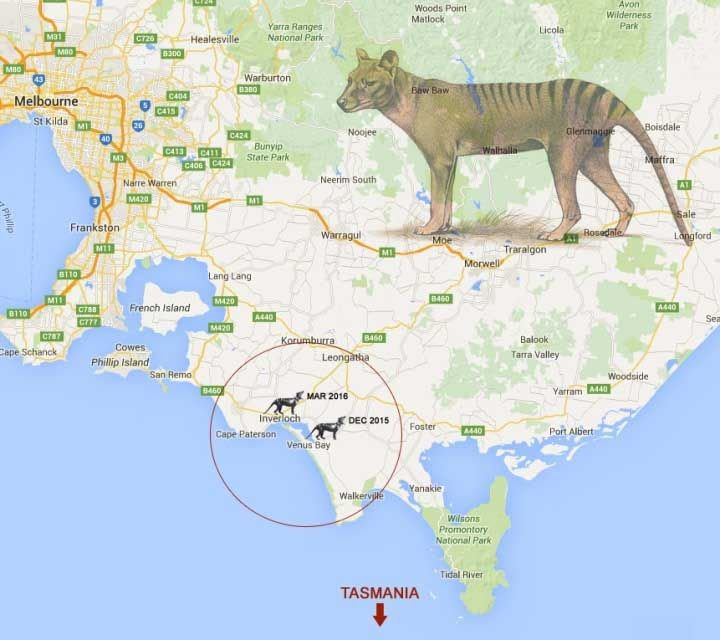 Tas-Tiger-Sighting-Map.jpg