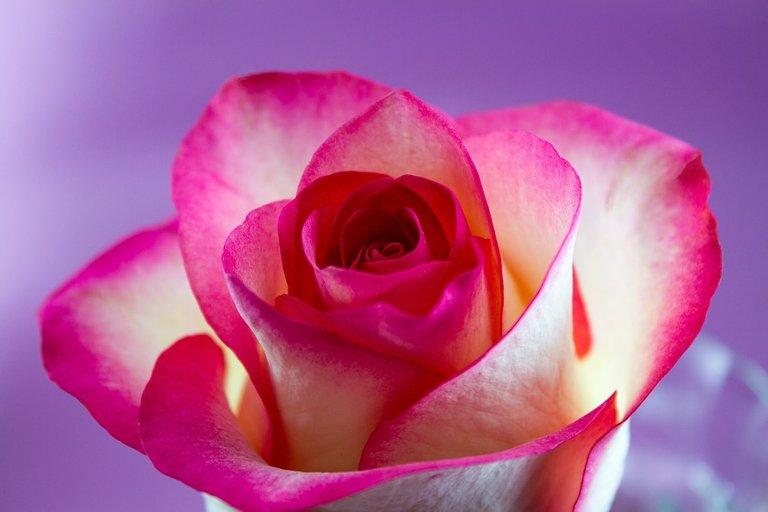 flower-3233271_960_720.jpg