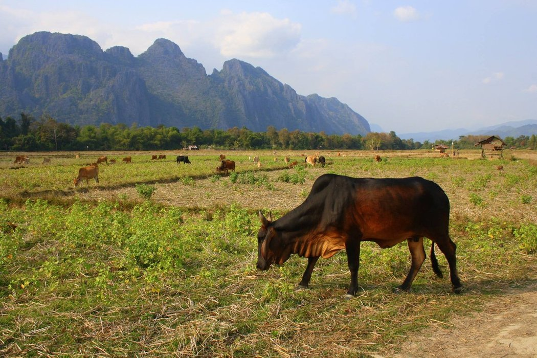 Vang Vieng, Laos is a nature-lover's paradise. Outdoor activities range from water sports on the Nam Song to hiking, climbing, exploring caves. and swimming.