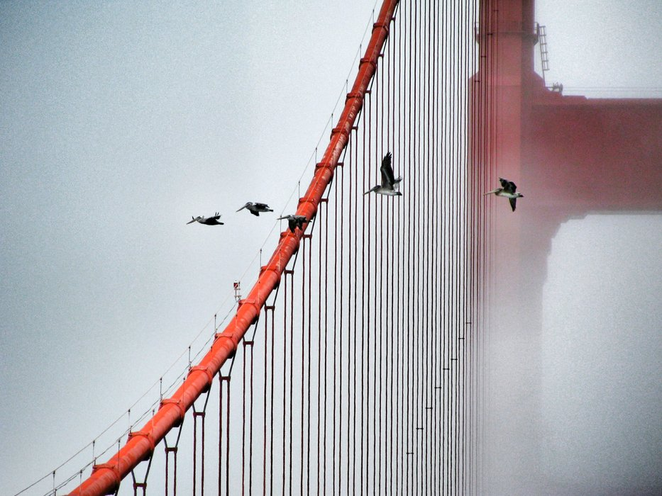 Golden Gate Bridge (22).jpg