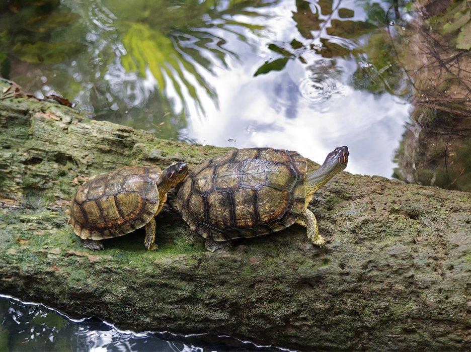 P7170301-turtles-grand-cenote.jpg