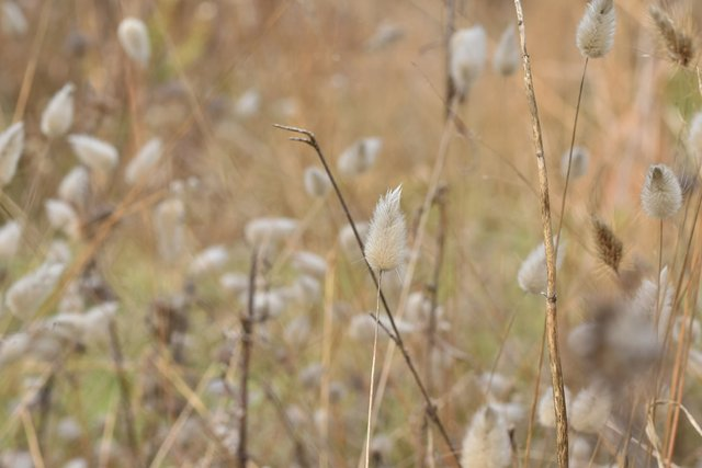 fluffy grass drystuff 2.jpg