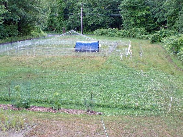 Pasture pen  1st move crop June 2020.jpg
