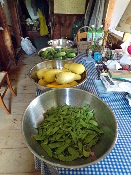 Sugar peas, squash, cukes crop July 2020.jpg