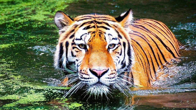 089_Espiritismo_029_Vicios_22042020_tigre.jpg