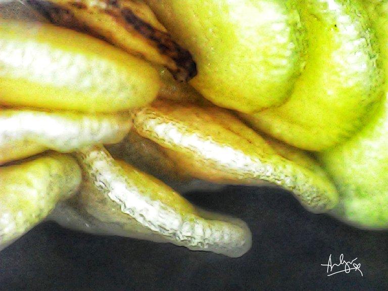 capsicum seed.jpg