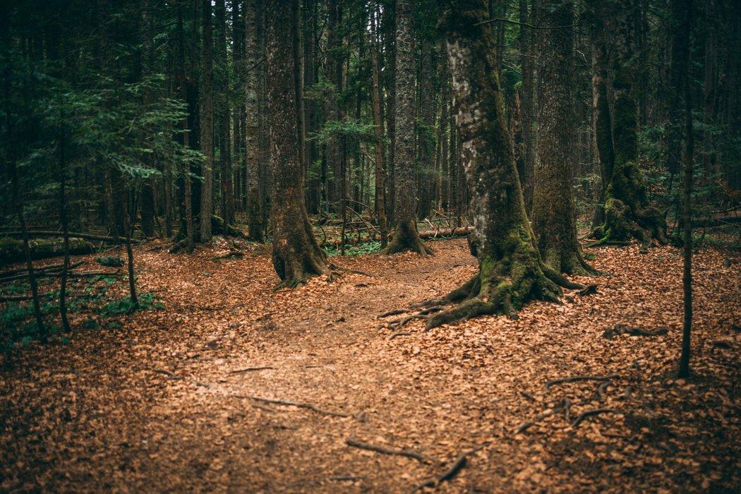 Tepih livada - Carpet meadow