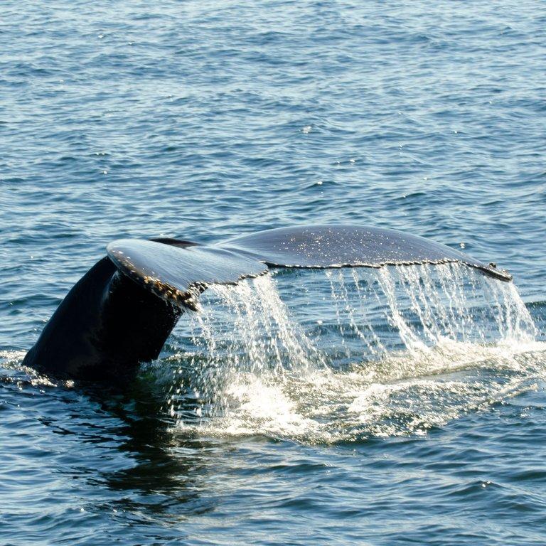 COASTW Whale Bungee.jpg