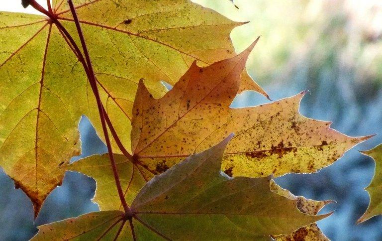 0828-Leaves.jpg