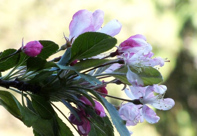 0018-Cherries.jpg
