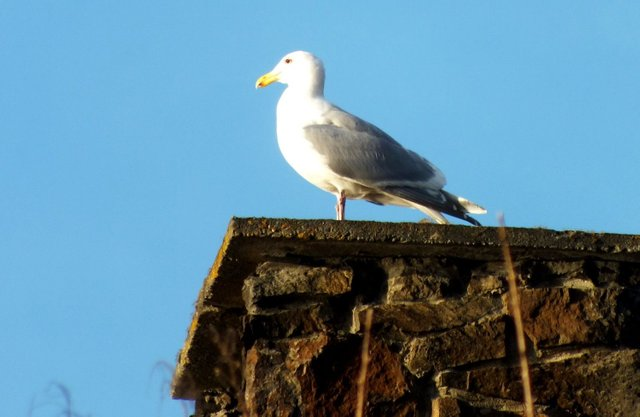 0944-Seagull.jpg