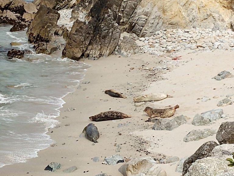 Monterey seals.jpg