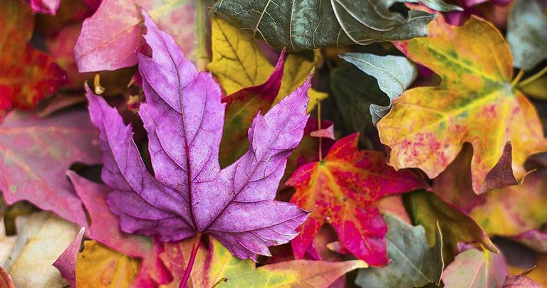 otoño.jpeg