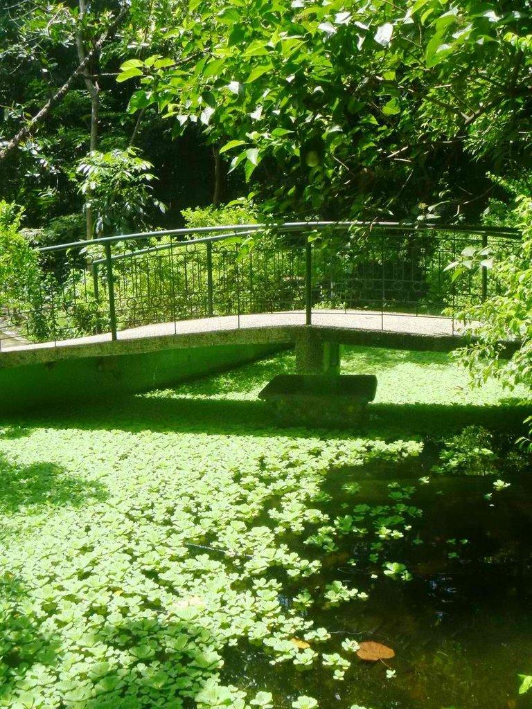 Arroceros-Forest-Park-12.jpg