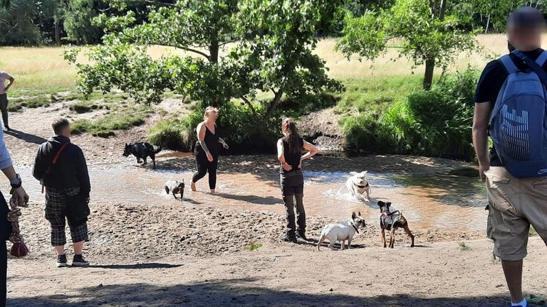 Extrem glückliche Hunde am Strand (3)