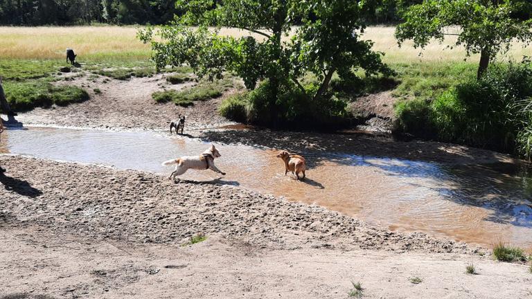 Extrem glückliche Hunde am Strand (2)