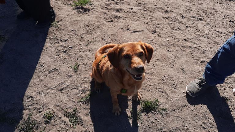 Extrem glücklicher Hund (1)