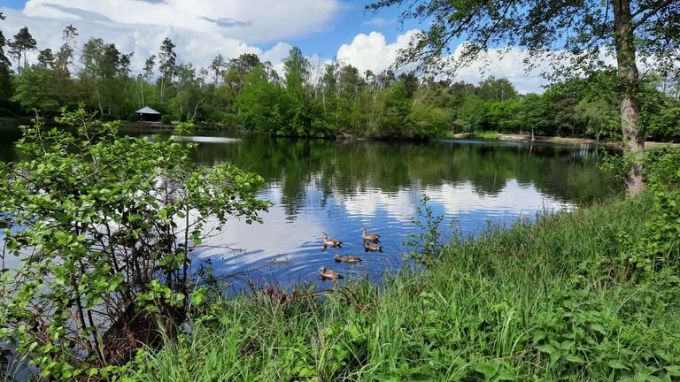 Der Grundsee am hinteren Ende der Hundewiese (3)