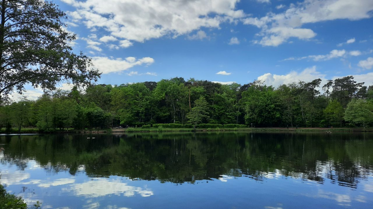 Der Grundsee am hinteren Ende der Hundewiese (4)
