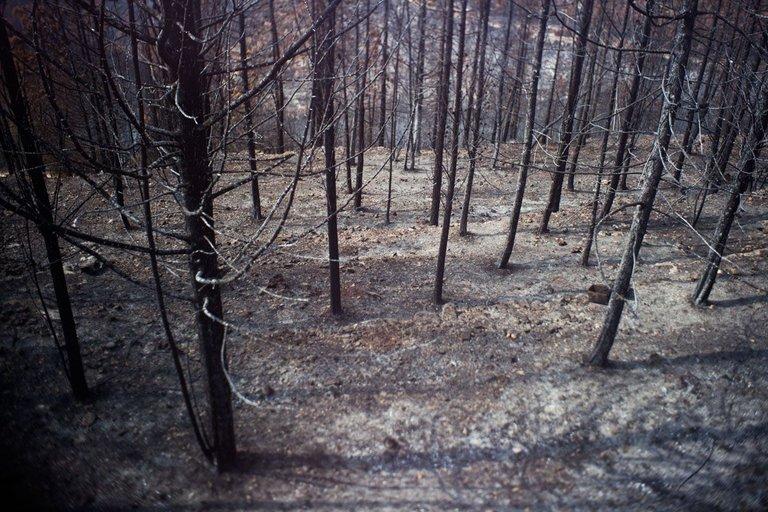 Burned_forest_2021_by_Victor_Bezrukov-10.jpg