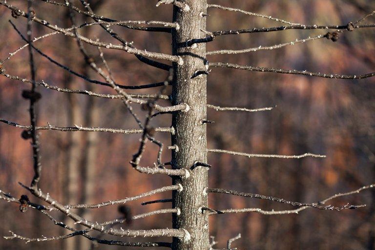 Burned_forest_2021_by_Victor_Bezrukov-5.jpg
