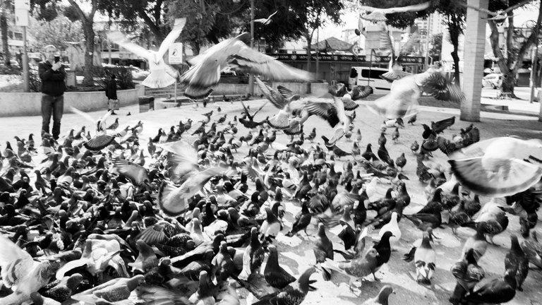 Birdies_Petah_Tikva_2020_by_Victor_Bezrukov-4.jpg
