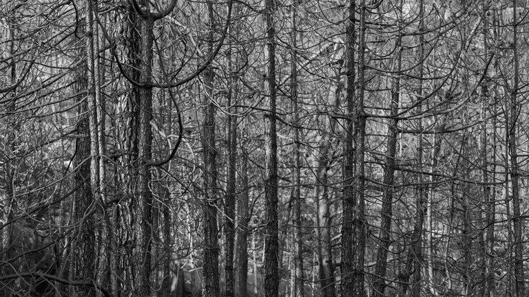 Burned_forest_2021_by_Victor_Bezrukov-4.jpg