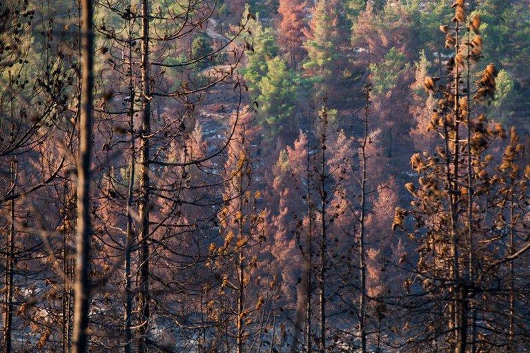 Burned_forest_2021_by_Victor_Bezrukov-9.jpg