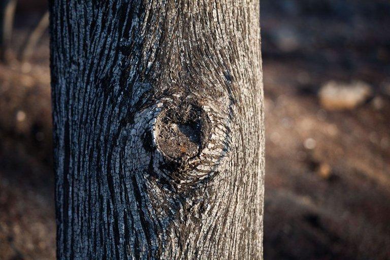 Burned_forest_2021_by_Victor_Bezrukov-8.jpg