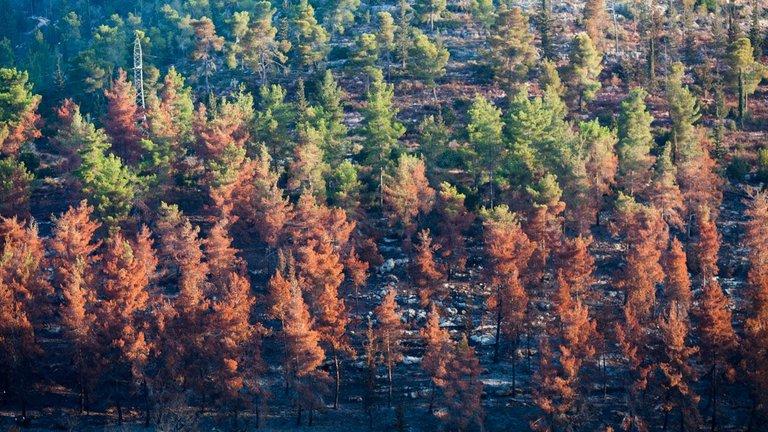 Burned_forest_2021_by_Victor_Bezrukov-3.jpg