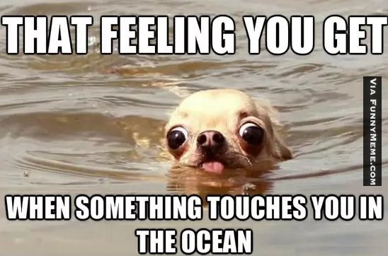 dog_memes_something_touches_you_in_the_ocean.jpg