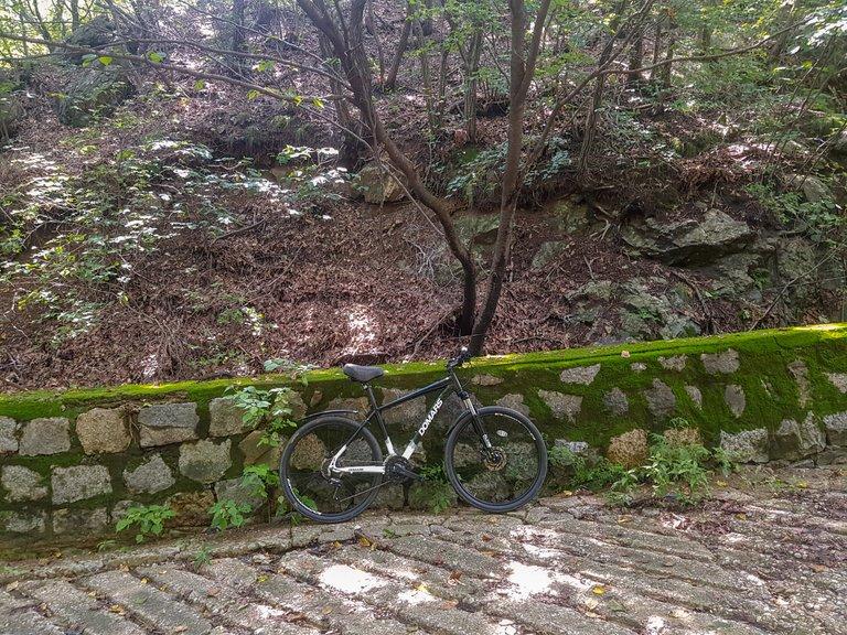 new bike 6.jpg